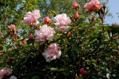 3 clos des rosiers